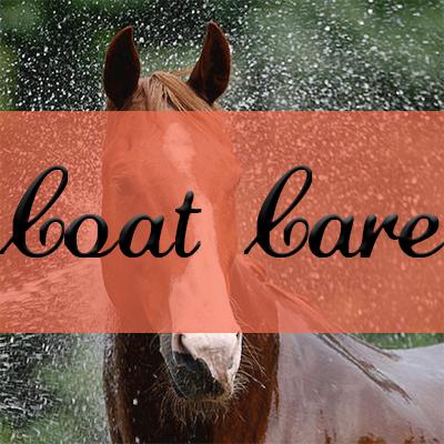 Horse Coat Care